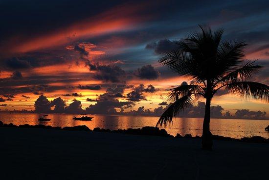 Imagen de Islander Resort, a Guy Harvey Outpost