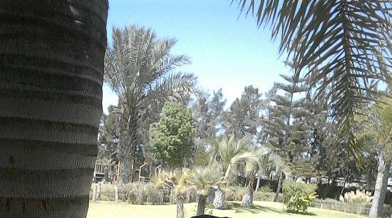 Temara, Marruecos: Jardin de derriere_large.jpg