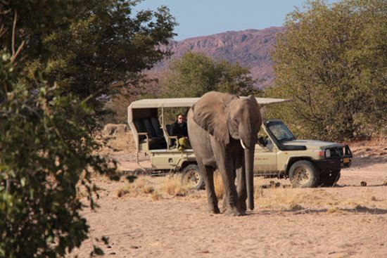Opuwo, Namibia: Desert Elephants trip with Mowani Mountain Camp - walking away