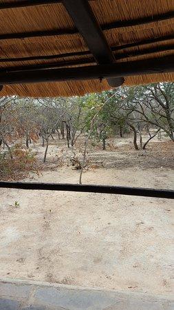 Timbavati Safari Lodge Photo