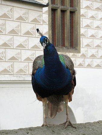 파르두비체 사진