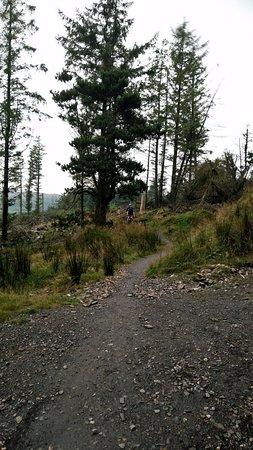 Wicklow, Irlanda: Mountain bike trail