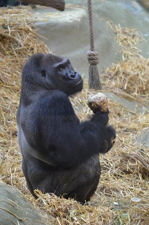 Kölner Zoo: Zoo de Cologne