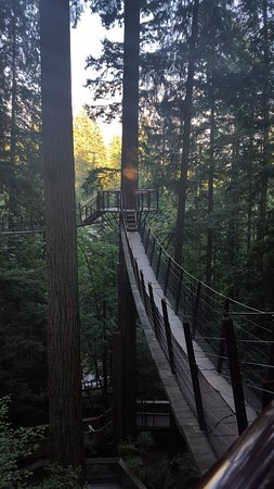 Nord-Vancouver, Canada: Tree top adventure