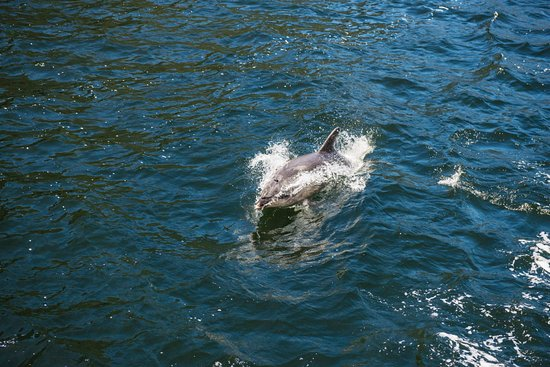 Queenstown, New Zealand: We seen a ton of Dolphins, nice!