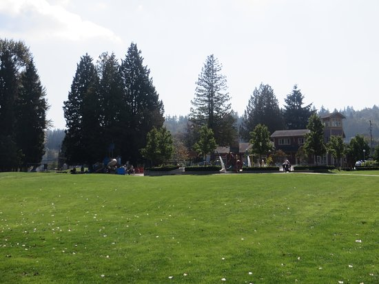 Port Moody, Canada: The grass area and left over goose dropping.