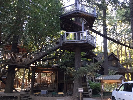 Out 'n' About Treehouse Treesort: one area of access to different tree house units