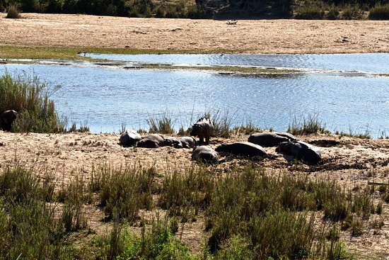 Lower Sabie Restcamp: Wie im Kino