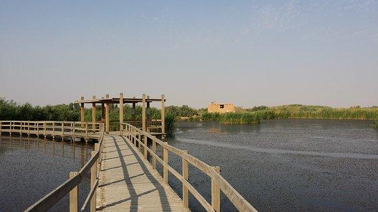 Azraq, Jordan: 20160826_170006_large.jpg