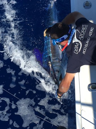 DBM Azores - Sport Fishing and Dive