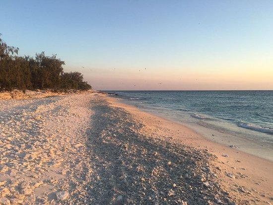 Bilde fra Lady Elliot Island