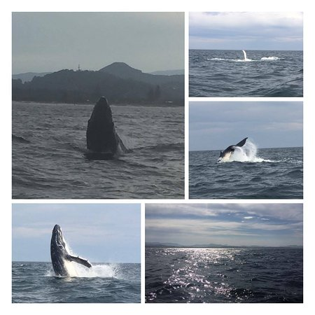 Blue Bay Whale Watching : only a small selection...