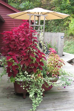 West Stockbridge, MA: clawfoot tub planter