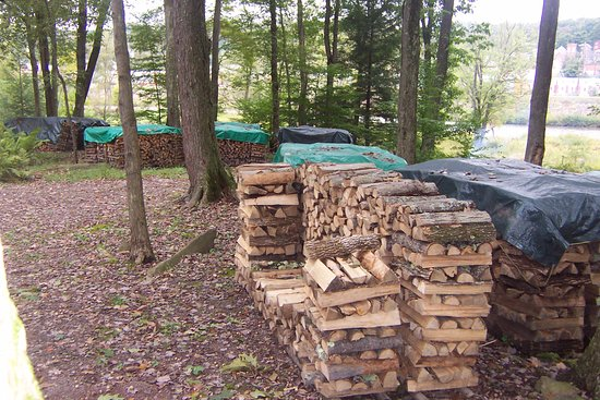 Husky Haven Campground: ample fire wood