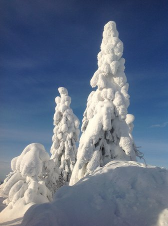 Iso-Syote, Finlandia: Snow covered tree