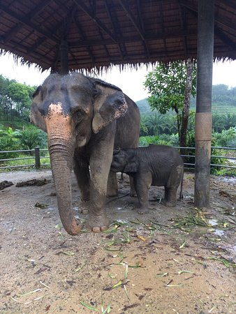 their eyes say so much. - Picture of Phang Nga Elephant ...