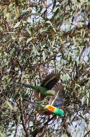 Patchewollock, Australia: A bird watching heaven