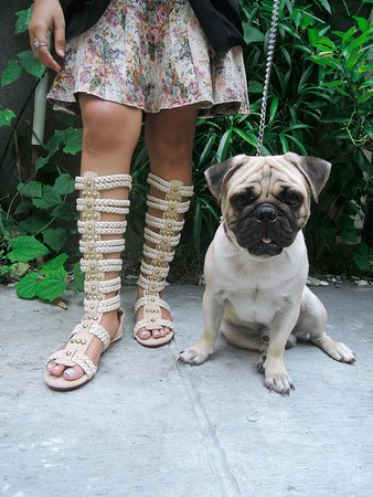 Kerobokan, Indonésie : Long Cream Gladiators with Astor the pug. Black available. Colors can be custom ordered.