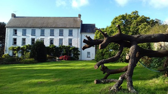 Roch, UK: Cuffern Manor from the front garden. The oak which blew over earlier in the year is now a featur