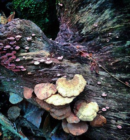 Νότια Επαρχία, Σρι Λάνκα: Wild mushrooms
