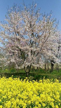 Ogata-mura Foto