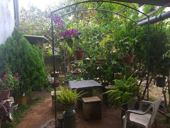 hotel negombo smoking arealittle garden - Little Garden