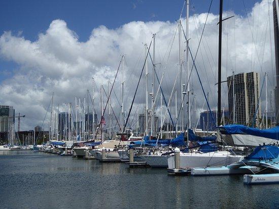 Ala Wai Yacht Harbor : いつでも出航できます