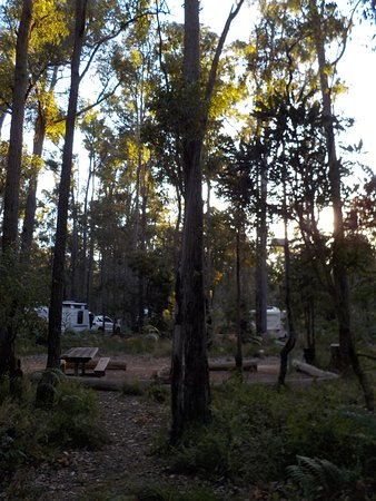 Dwellingup Chalets & Caravan Park: How far away other camper were, so peaceful in your own little patch of nature.