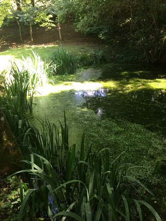 Montbray, France: One of our ponds