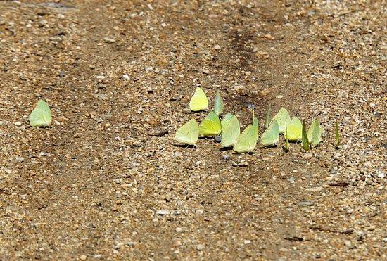 Kingfisher Park : Бабочки