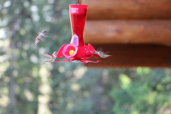 Clearwater Springs Ranch: Kolibris auf Veranda