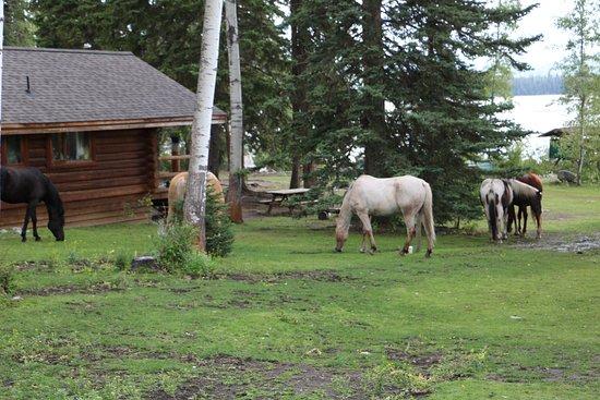Lac La Hache, Canada: Die Pferde weiden auf dem Gelände