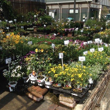 Kurume Garden Center