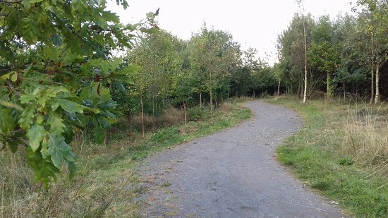 National Forest: Hicks Lodge trails suitable for cycling, running or just strolling.