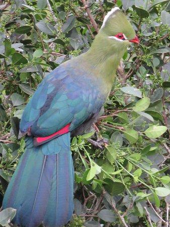 Rheenendal, Νότια Αφρική: Take your camera if you are an avid birdwatcher.