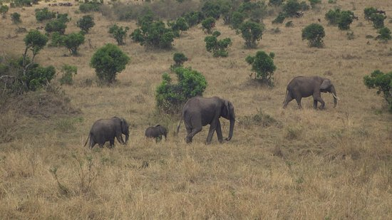 Enchoro Wildlife Camp: Elephant family in the reserfation