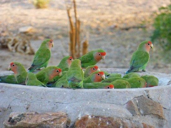 Usakos, Namibia: Einzig toller Blick beim Frühstück, die Vogelschale.