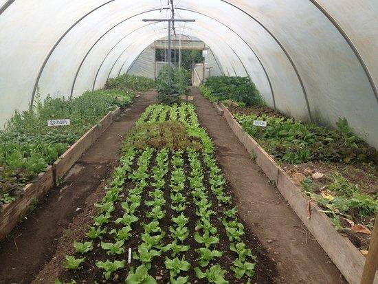 Laytown, Irland: Sonairte organic garden