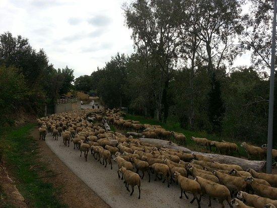 Siurana, Spanien: De paseo