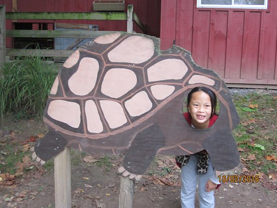 Norristown, PA: Our daughter Madison in a turtle cutout for pictures