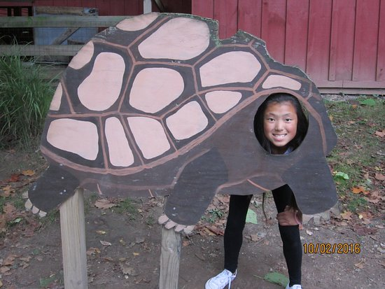 Norristown, PA: Our daughter Abby in a turtle cutout for pictures