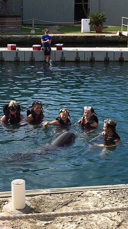Dolphin Quest: photo1.jpg