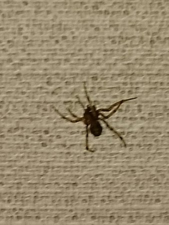 Fairfield, NJ: My Other Room Guest