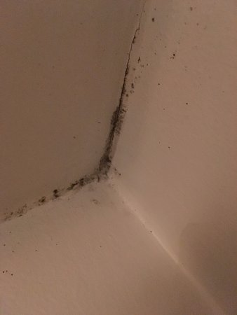 Apartment K: Black Mold On Ceiling