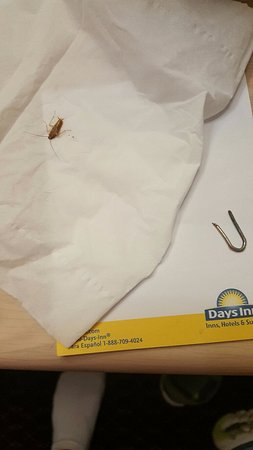 Absecon, Nueva Jersey: this is just one of the many roaches I killed in my room and a staple that was found on the floo