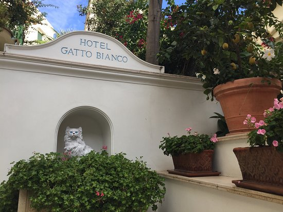 Photo0jpg Picture Of Hotel Gatto Bianco Capri Tripadvisor