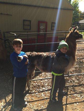 Waconia, Minnesota: Carlson's Lovable Llamas