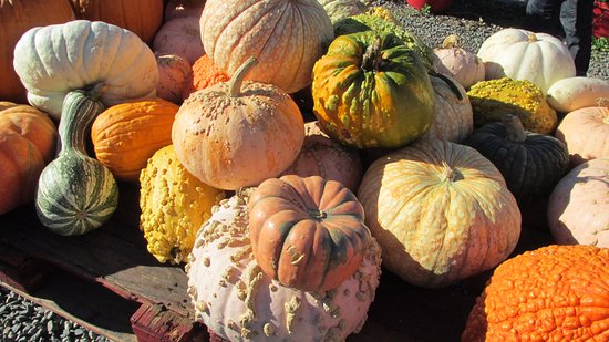 Decorative Pumpkins And Gourds For Sale Picture Of Demarest Farm