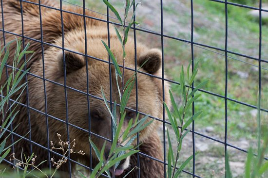 Kamloops Wildlife Park: Grizzly