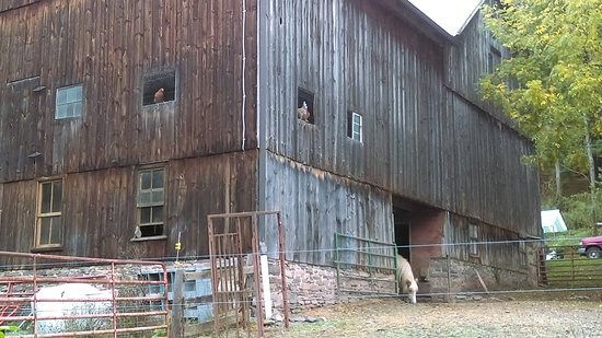 Orangeville, PA: The barn at Forks Farm